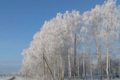 Зимние