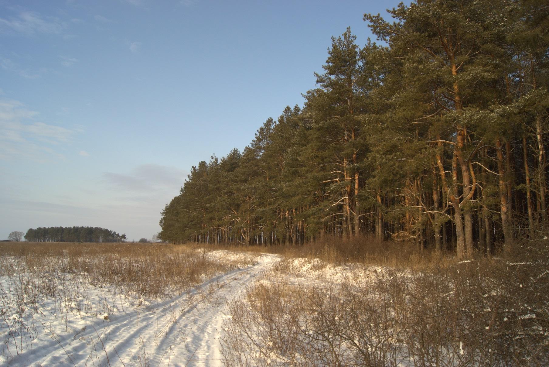 Сосенки - пойменный рукотворный островок леса